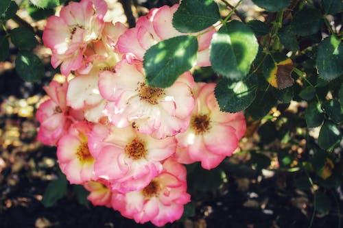 Gratis lagerfoto af blomster, blomsterhave, blomstrende blomster, fjeder