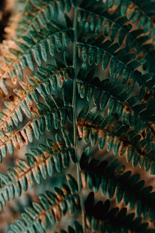 Close-Up Photo of Fern Leaves