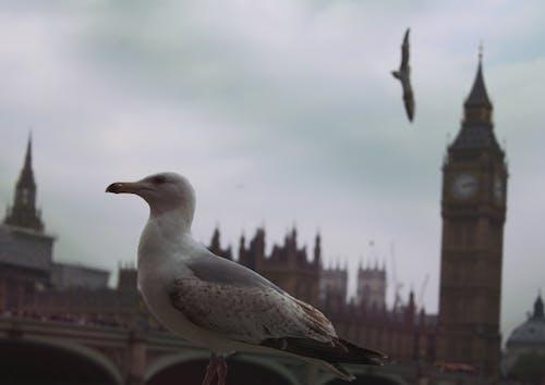 obm, 伦敦市, 倫敦, 倫敦大笨鐘 的 免费素材照片