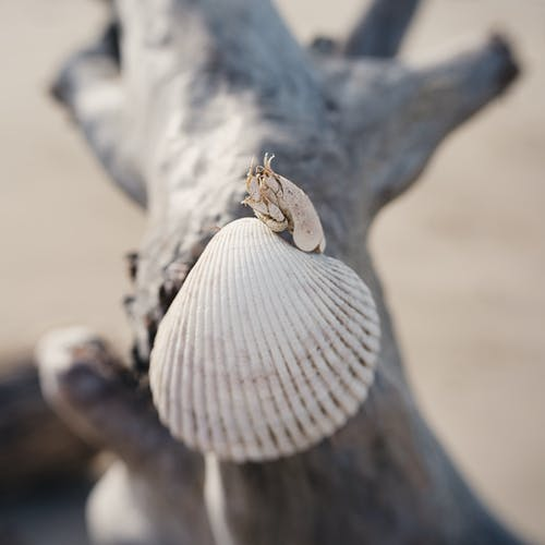 Free stock photo of crab, driftwood, ocean, sea