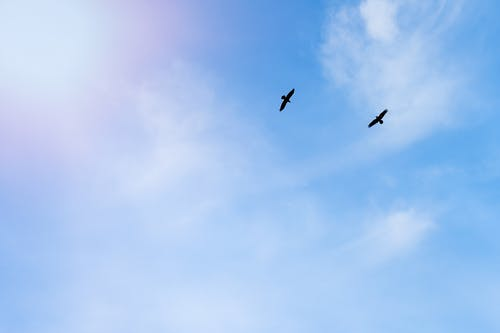 From below of carnivorous birds with spread wings soaring in bright cloudy sky in daylight