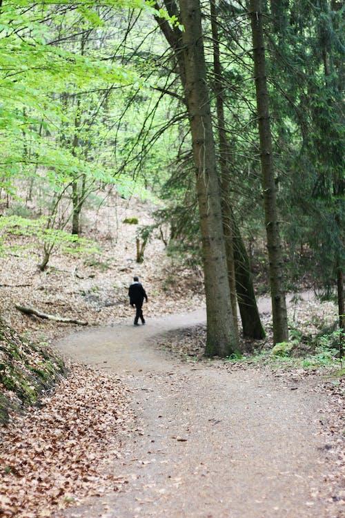 Foto profissional grátis de aconselhamento, andar, ao ar livre, árvore