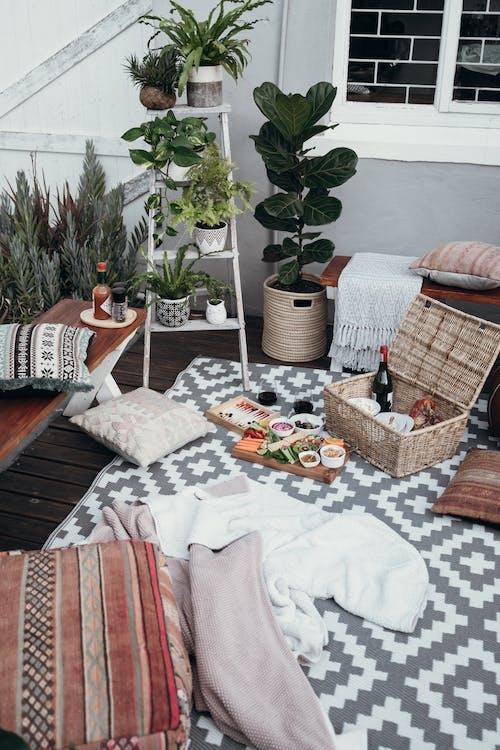 Gratis lagerfoto af dekorative planter, frokost, hyggeligt hjem