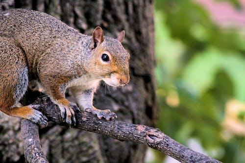 Free stock photo of animal, nature, squirrel