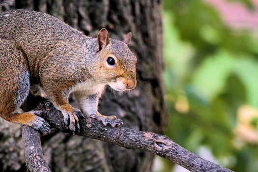 Free stock photo of nature, animal, squirrel, tree branch