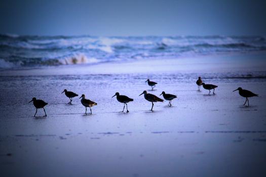 Free stock photo of bird, beach, sand, ocean