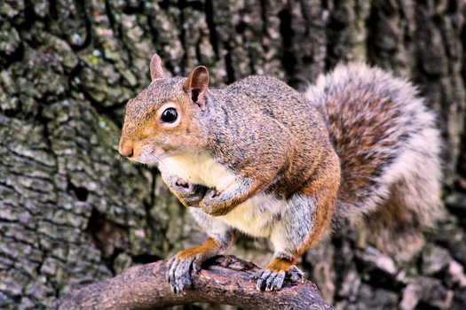 Free stock photo of nature, animal, cute, squirrel