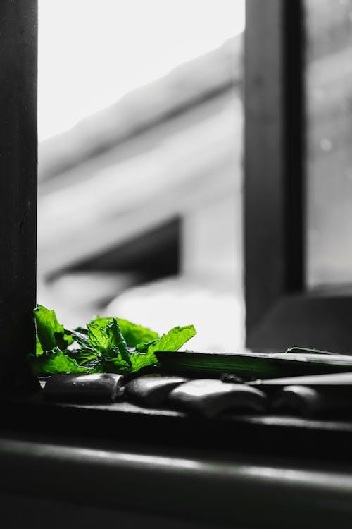 Free stock photo of leaf, window