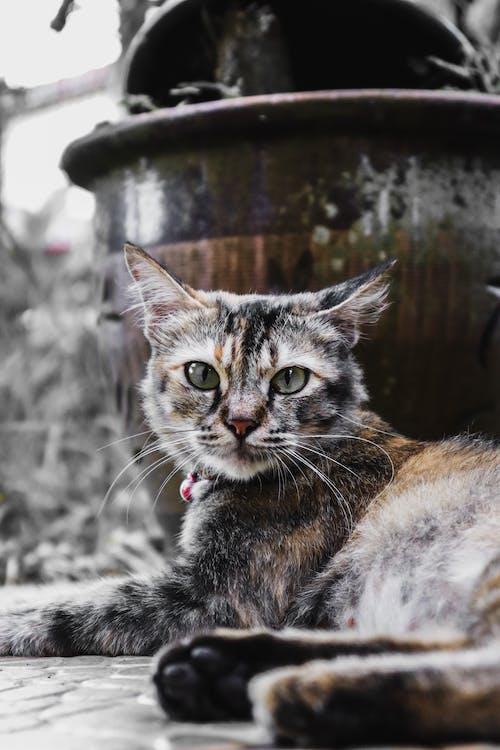 Free stock photo of cat, cat eyes, cute