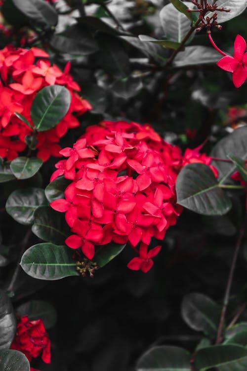 Free stock photo of beautiful, flower, flowers