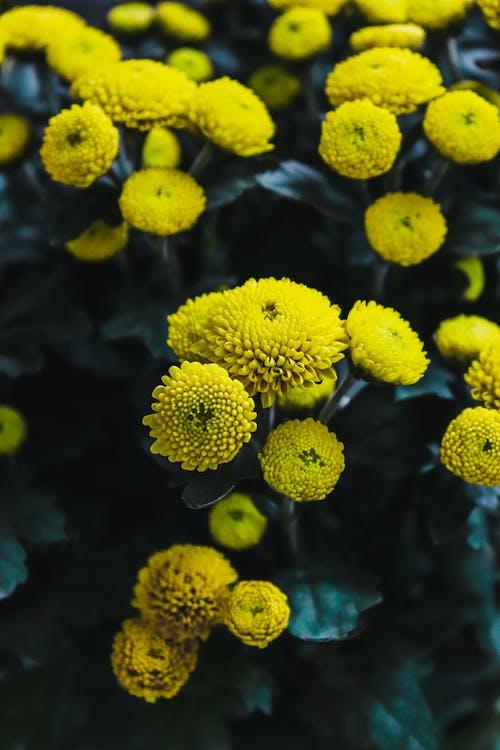 Free stock photo of beautiful, flower, nature