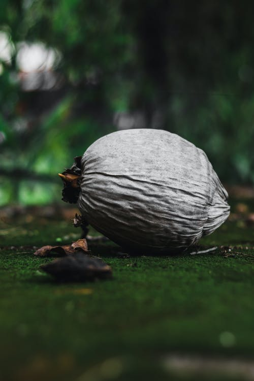 Free stock photo of coconut, old, street