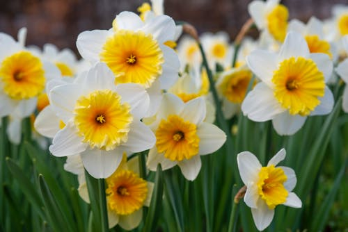 Free stock photo of blüten, gelb, Pflanzen, Sonnenblume