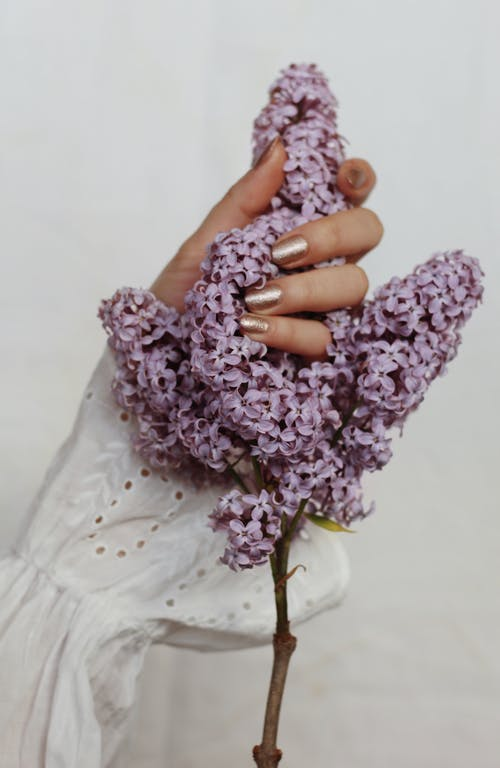 Crop woman holding lush lilac twig