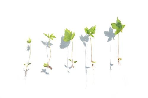 エコロジー, ハーブ, フローラ, 土壌の無料の写真素材