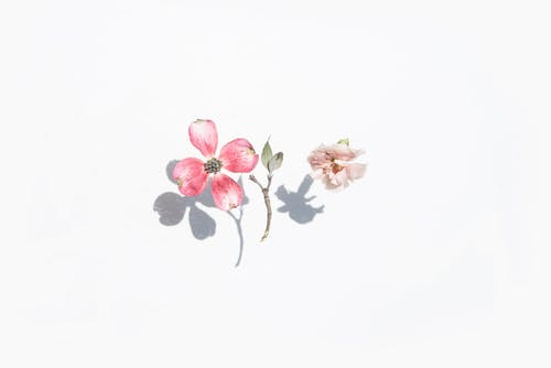 カード, パステル, バックグラウンド, ピンクの無料の写真素材
