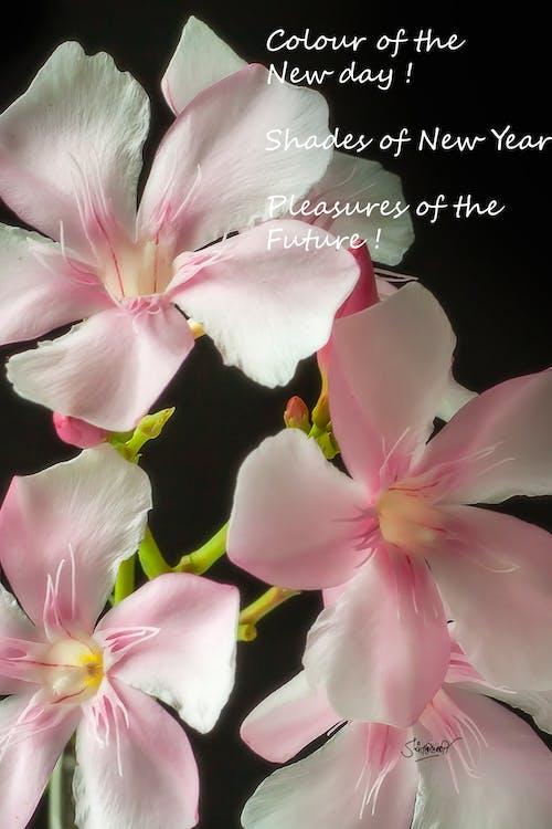 Immagine gratuita di fiore, messaggio, sollevare i nostri spiriti