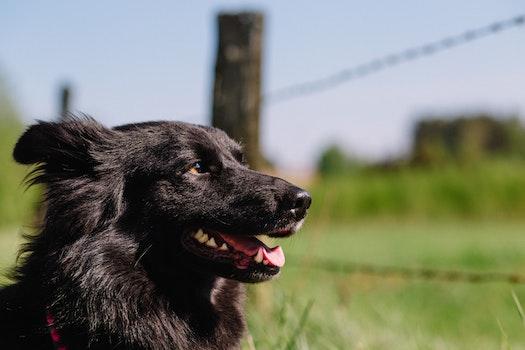 Free stock photo of dog, pet, blur, fur