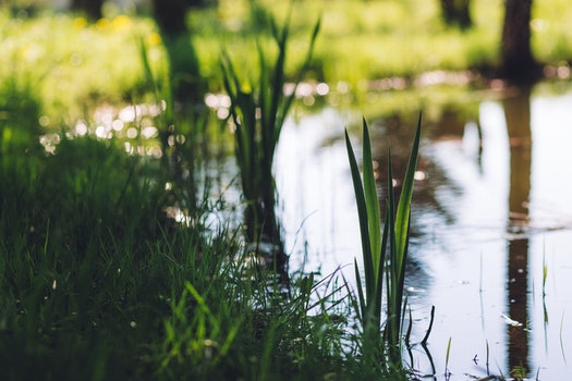 Free stock photo of water, grass, blur, growth