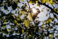 nature, sun, branches