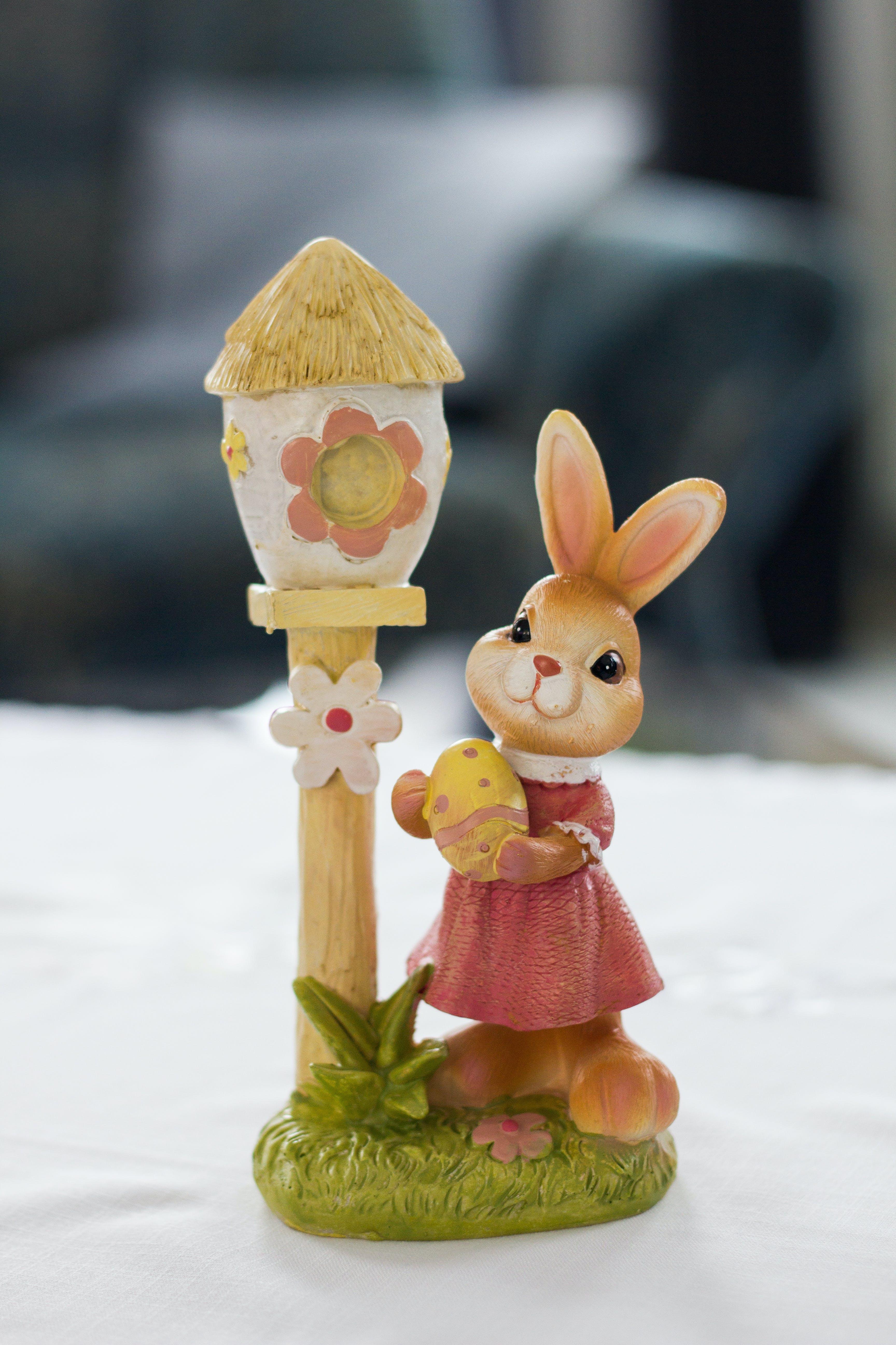 Free stock photo of cute, rabbit, rabbits