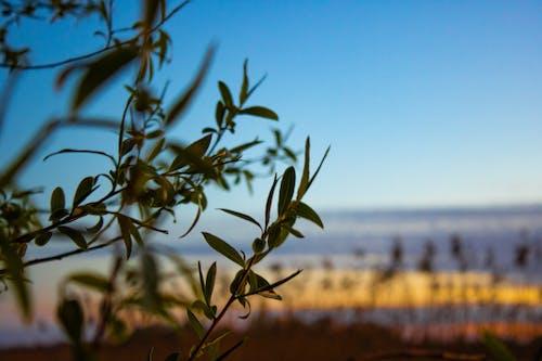 Free stock photo of błękitne niebo, drzewo, gałąź, krzew
