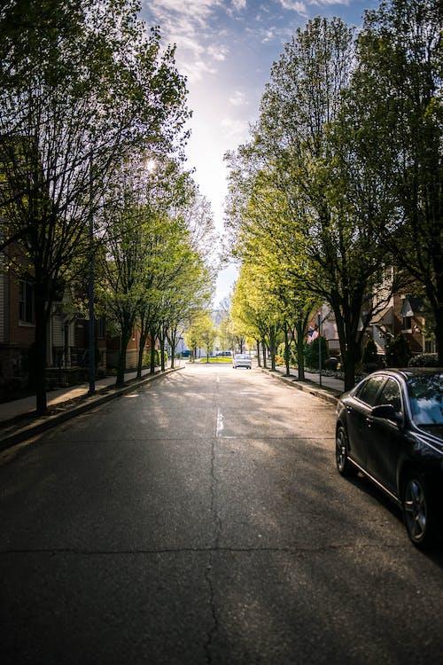 Free stock photo of city, light, neighborhood, outdoor