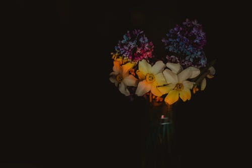 Free stock photo of abstract art, beautiful flowers, black background