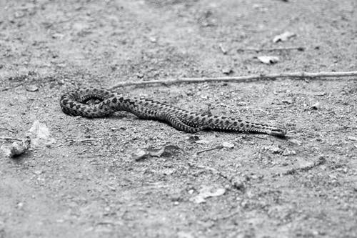 venin, 동물, 뱀, 비에르의 무료 스톡 사진
