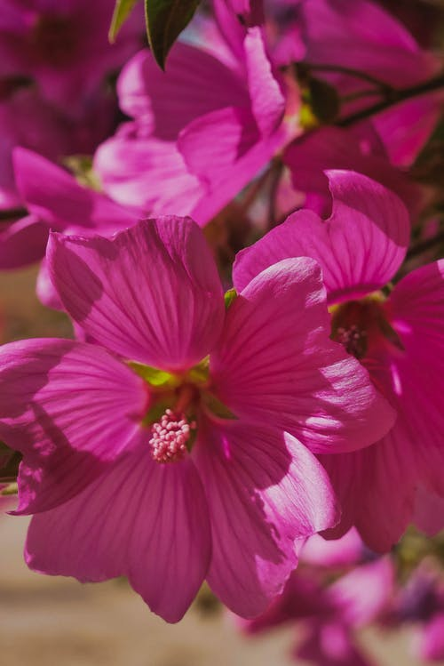 Free stock photo of beautiful flowers, bloom, blooming, blossom