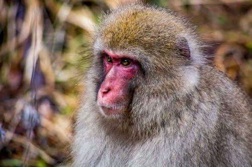 White and Brown Monkey in Tilt Shift Lens