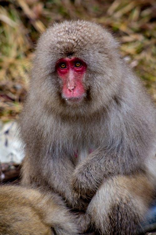 Gray Monkey Sitting on Ground