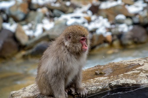 Brown Monkey on Brown Rock