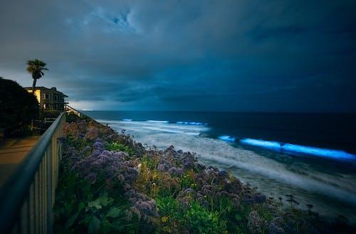 Imagine de stoc gratuită din coasta californiei, oceane bioluminiscente, strălucitor
