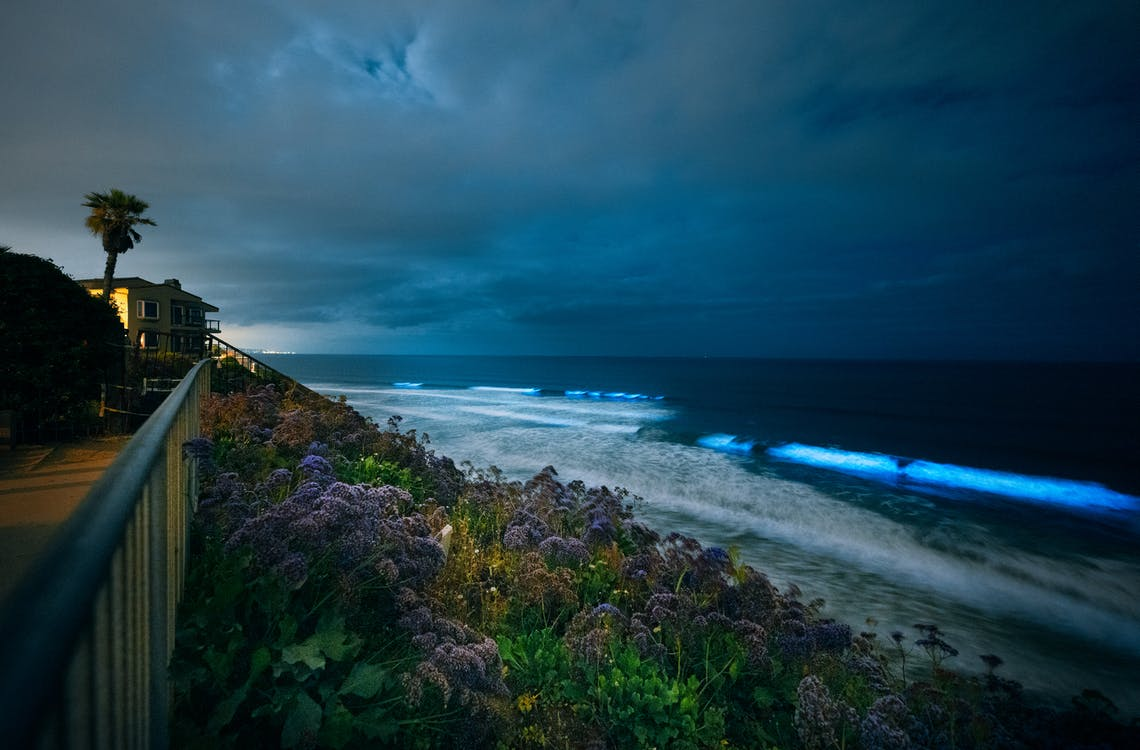 Free stock photo of Bioluminescent Oceans, california coast, glowing