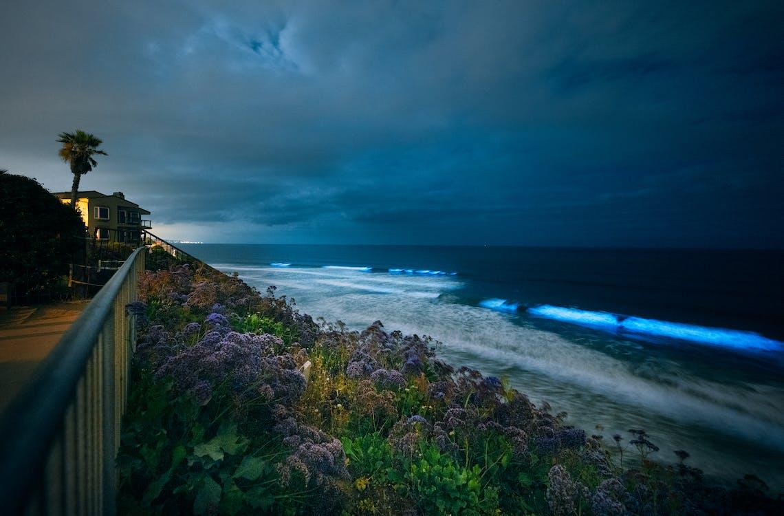 Gratis stockfoto met bioluminescente oceanen, gloeiend, kust van californië