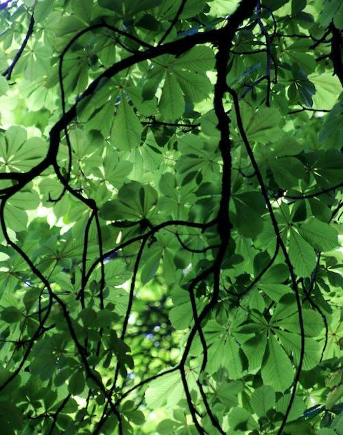 Free stock photo of branches, dark green leaves, dark green plants