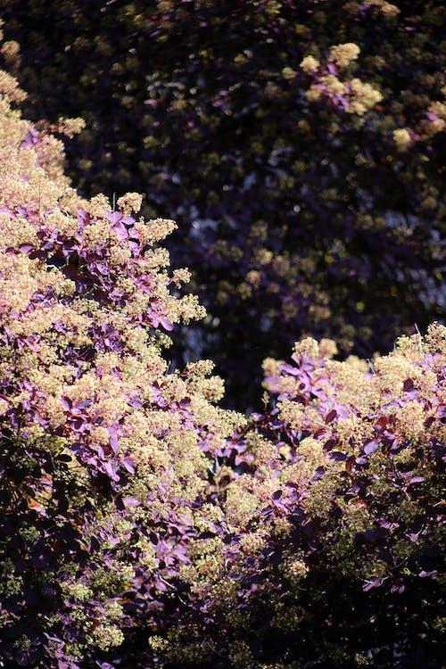 Free stock photo of beautiful flowers, bloom, blooming