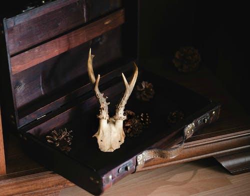 Free stock photo of case, cones, deer