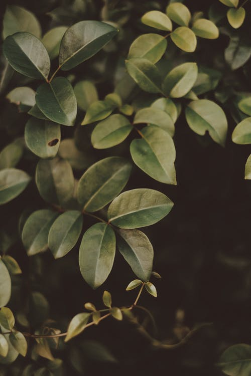 A Close Photo of a Bunch of Green Leaves