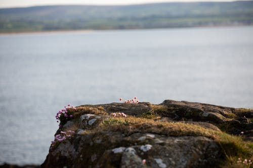 Free stock photo of cliff top, flowers, ocean, sea