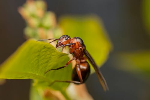 Small ant on green plant in wildlife