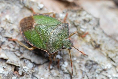 Small bug with antennas on tree