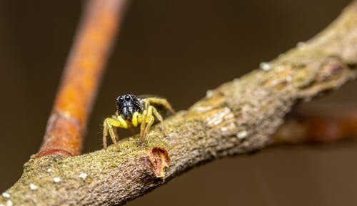 Little exotic jumping spider on tree