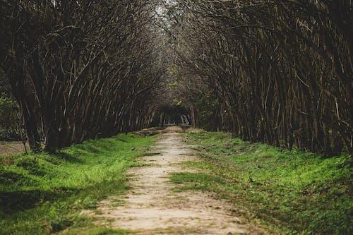 Základová fotografie zdarma na téma dřevo, fotografie přírody, krajina, lehký