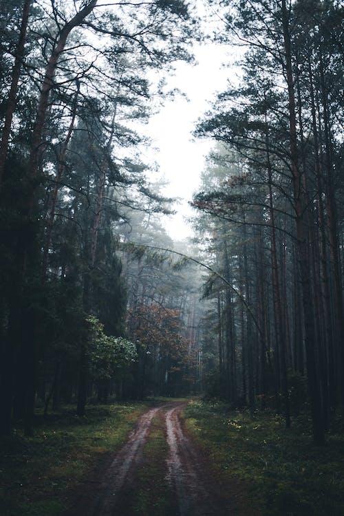 Gratis stockfoto met begeleiding, blad, bomen, boom