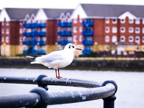 Free stock photo of nature, bird, buildings, animal