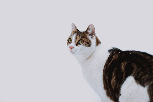 Adorable fluffy cat on white background