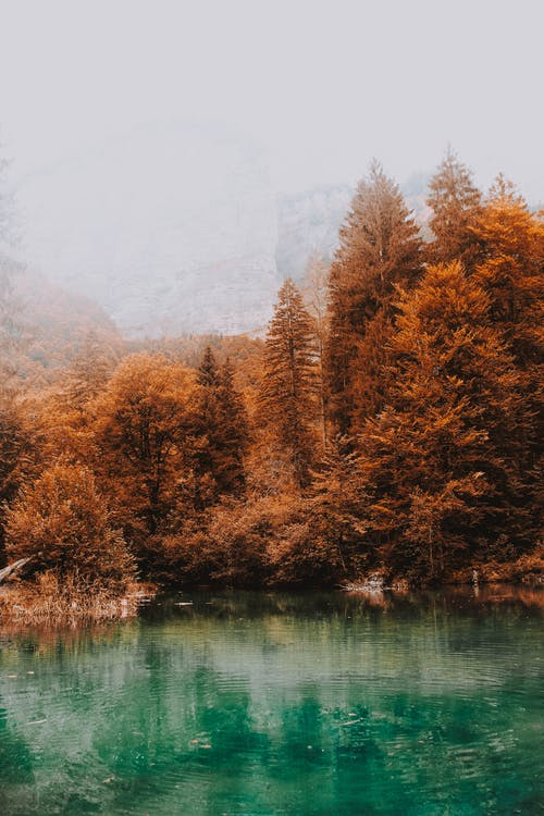 Peaceful scenery of autumn forest trees with yellow leaves growing nearby tranquil blue lake on cold day