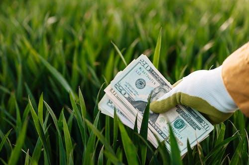 Crop unrecognizable gardener showing pile of American dollars above grass